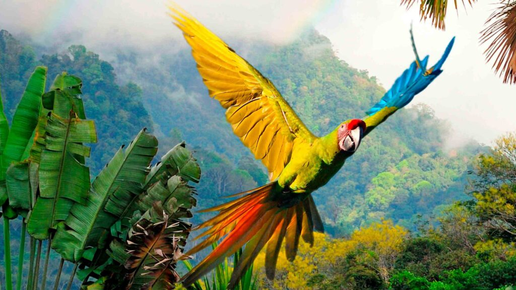 Picture of Parrot Flying